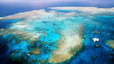 great barrier reef, koraal, code rood, klimaat