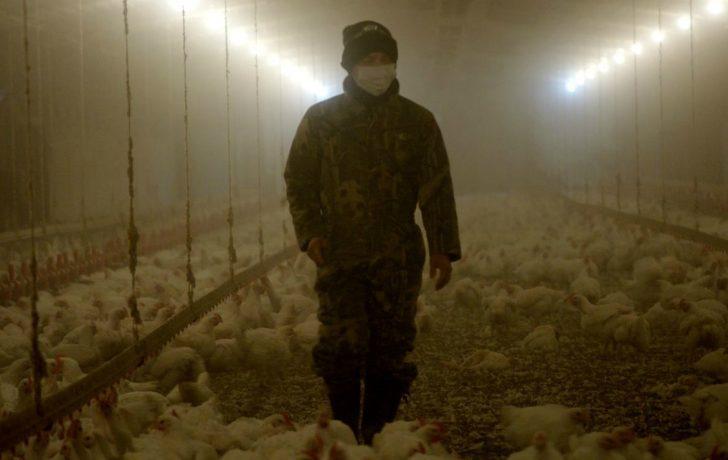 rotten, netflix, documentaire, serie, voedsel, netflix original