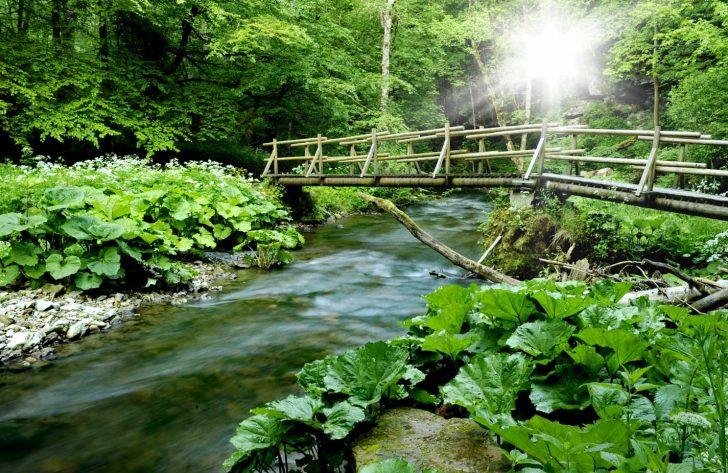 wandelen, duitsland, hikes, zwarte woud