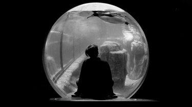 filterbubbel