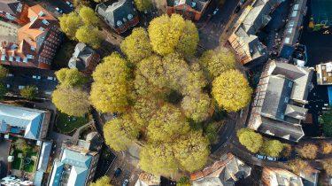 bomen in een stad