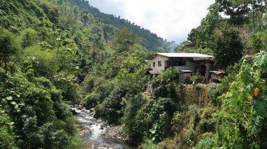 bergen van jamaica