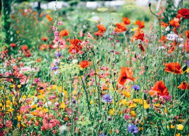 grasveld met bloemen