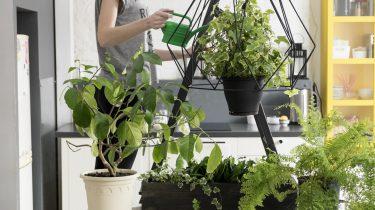 Planten voelen elkaar