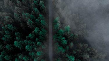 Noorwegen ontbossing