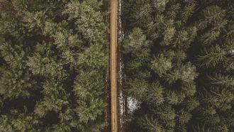 Bos van bomen af met een weg in het midden, ontbossing