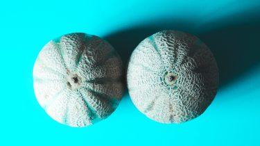 twee meloenen