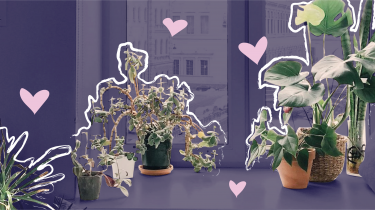illustratie planten