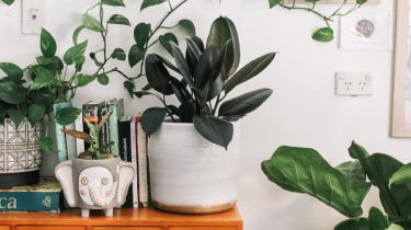 luchtzuiverende kamerplanten