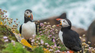 vogels geven negatieve feedback