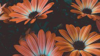 een veld met bloemen